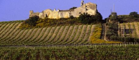 Vignes siciliennes. Photo d'illustration. © Jˆrg Heimann / AFP
